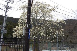 大和田駅1.JPG